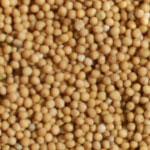 Gula senapsfrön i påse